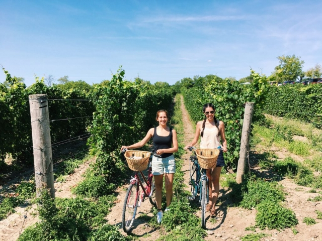 bicycling, vineyards, summer fun,